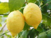 هضم اسان غذا با لیمو ترش